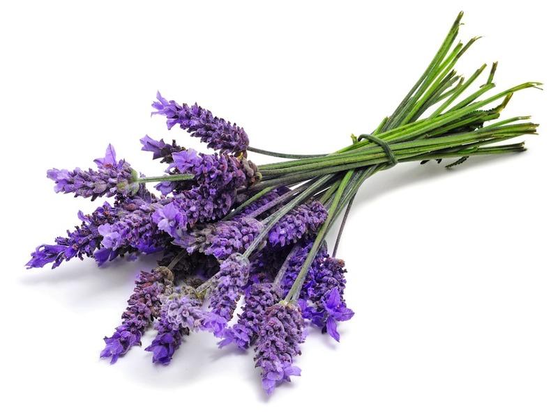 full.Lavender-1